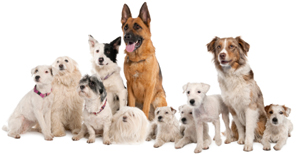 group of dogs image