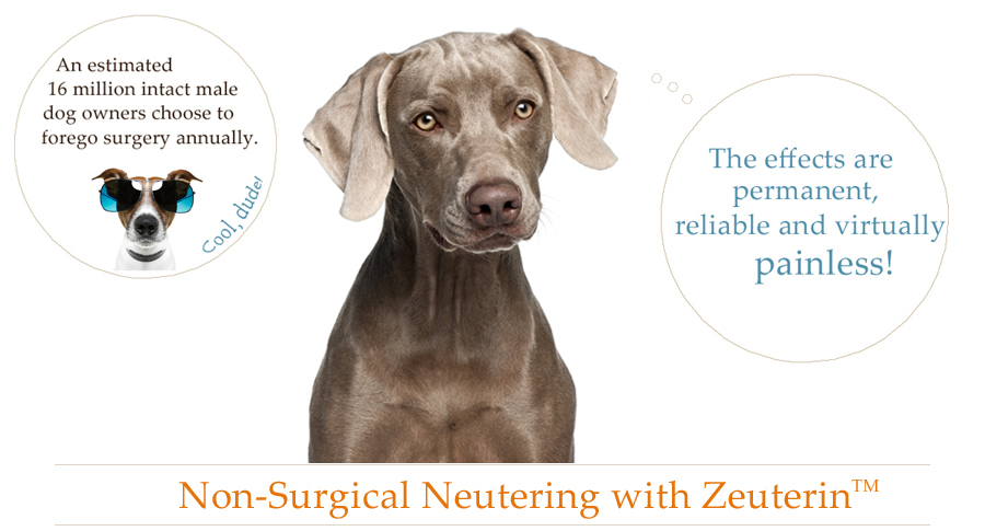 Dog Image for Zinc Sterilization Procedure